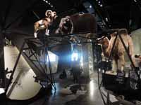 Musée des Confluences à Lyon DSCN8017