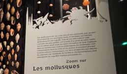 Musée des Confluences à Lyon DSCN8023
